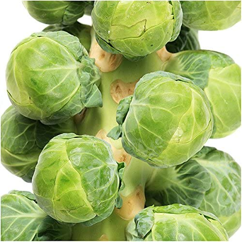 Marde Ross  Company Brussels Sprouts